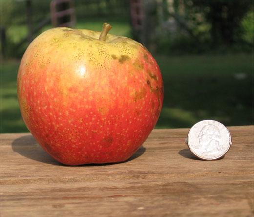 Century Farm Orchards: Apple Tree Nursery